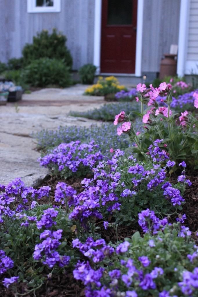 Perennials line granite walk