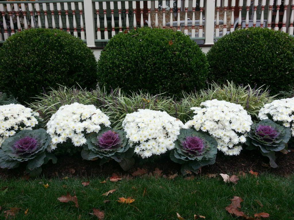 Fall annuals Ridgefield